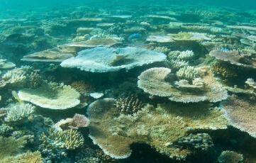 Reef Credits