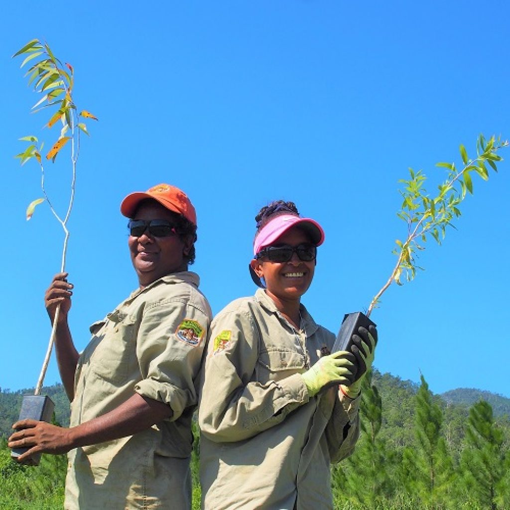 Tree-Planting for the Mahogany Glider