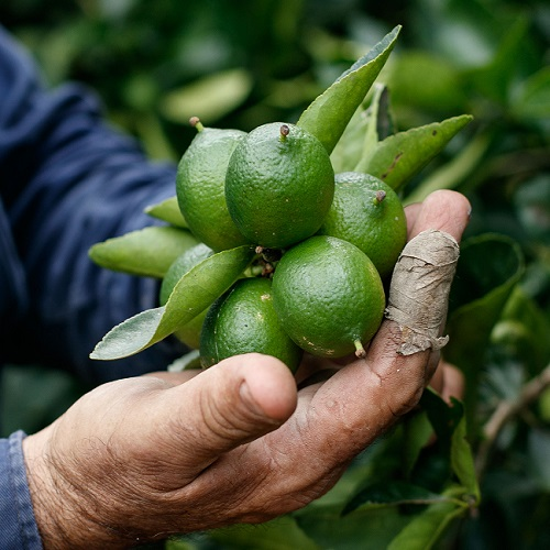 chemical free limes
