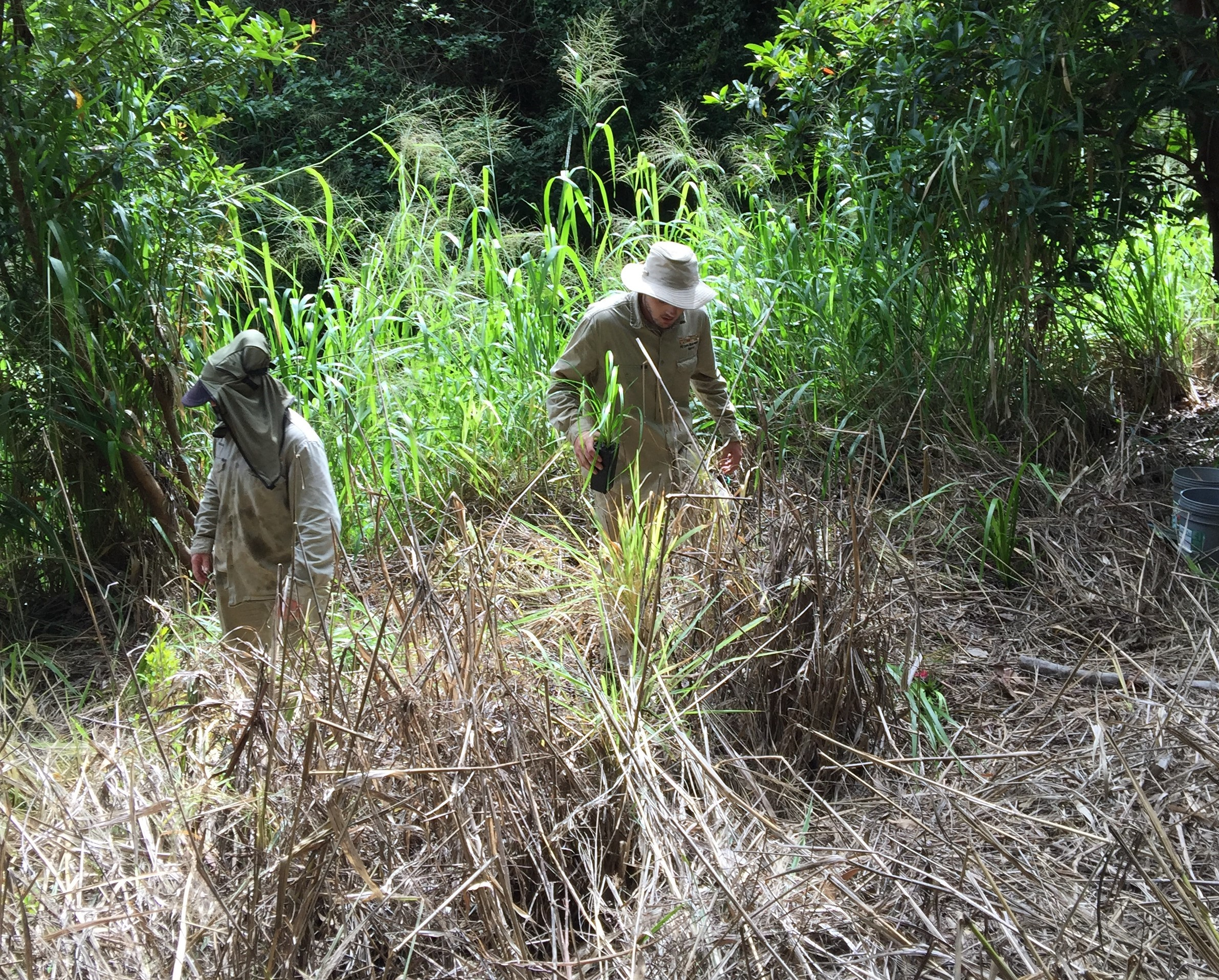 website-nrip-vegetation-tablelands