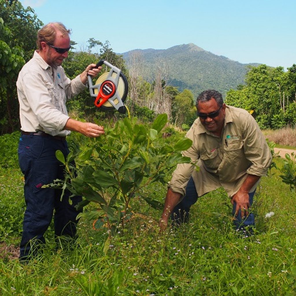 Making rainforest more resilient