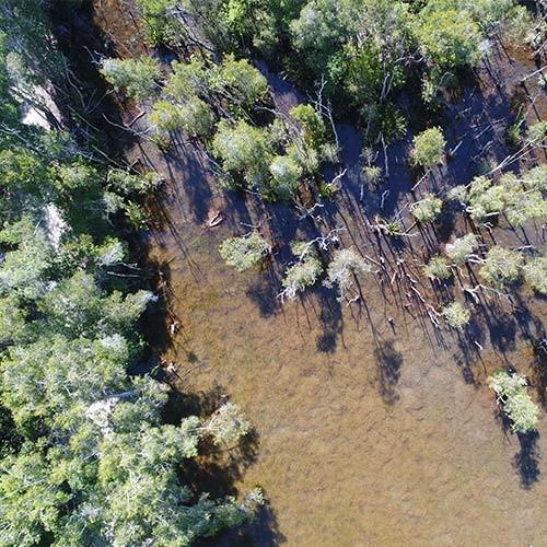 cardwell wetlands