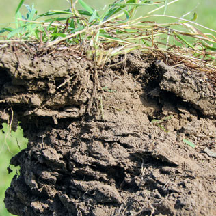 A clump of poorly structured soil